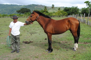 Horse-and-Vacqueiro-1-OK-copy-2-300x200