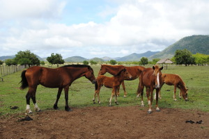 Horses-on-the-Ranch-OK-copy-2-300x200