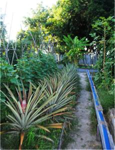 RVL-veg-garden-04-230x300
