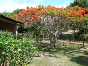 guyana_holidays_rock_view_lodge_gardens-300x225